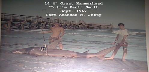 Sharksonthesand com view topic 14 39 4 hammerhead off for Corpus fishing forum